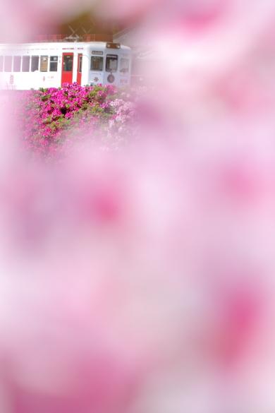 2015/c 和歌山電鐵貴志川線 大池遊園~西山口
