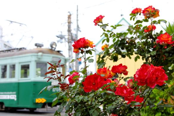 2009/5/6 阪堺電軌阪堺線 綾ノ町