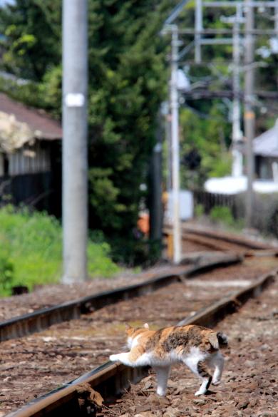 2010年5月 和歌山電鐵貴志川線 山東~大池遊園