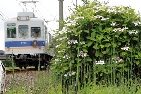 2008年6月 和歌山電鐵貴志川線 吉礼~伊太祈曽