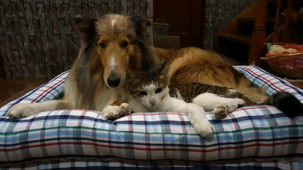 DSC03090夏用犬ベッドにて
