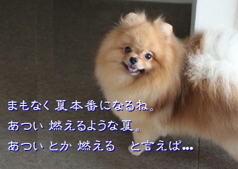 blog20150608-0.jpg