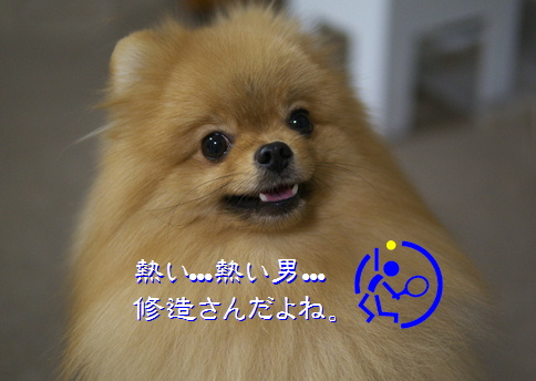 blog20150608-3.jpg