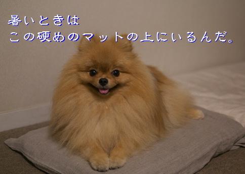blog20150608-4.jpg
