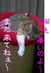 blog20150608-7.jpg