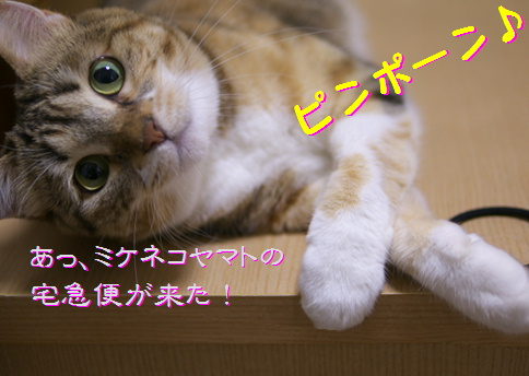 blog20150615-2.jpg