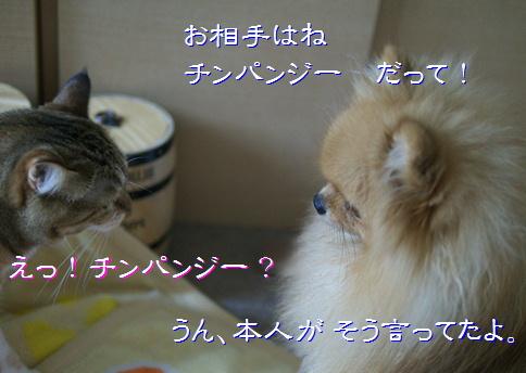 blog20150615-5.jpg