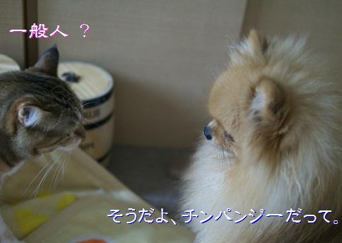 blog20150615-6.jpg