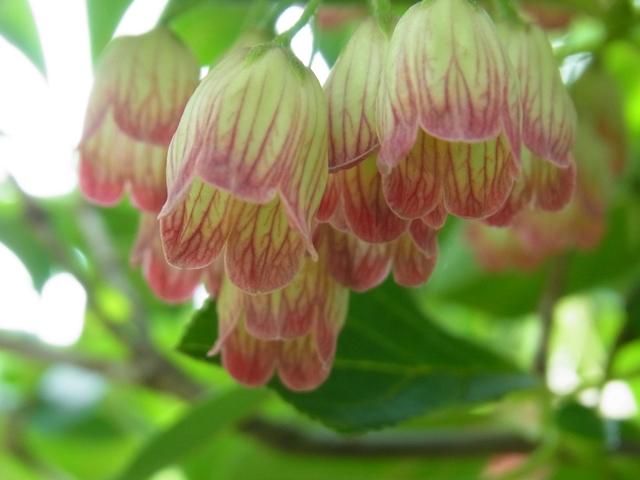 恐羅漢山の花003