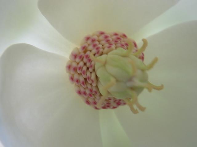 恐羅漢山の花008