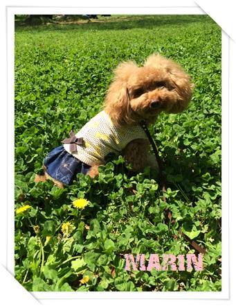 春の服IMG_3226