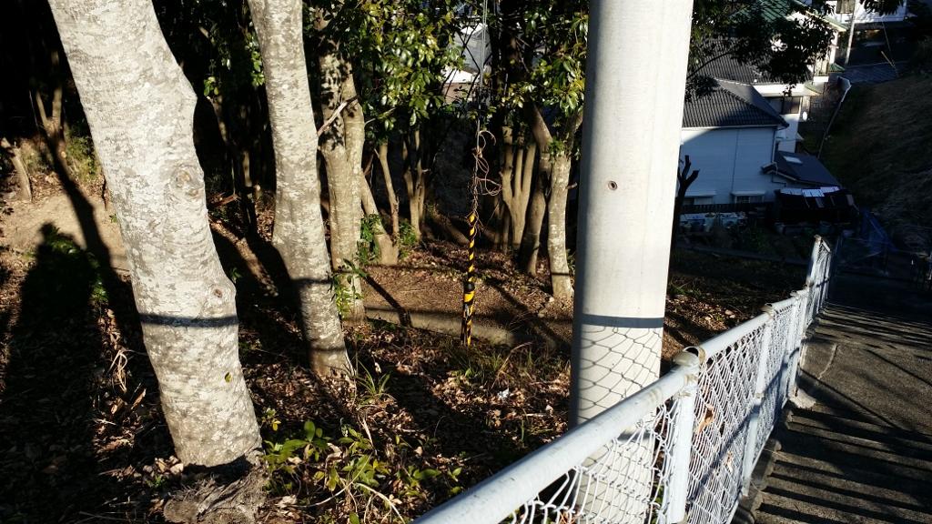 横浜ニュータウンの南側道路から入って一番目の信号を東に曲がった突き当たり。ガードレールの所の茂みや階段脇の茂みに毒餌1