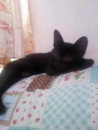 ソファーの上で独りで寝ているミドちゃん、ファド君が大阪に旅立った日に撮った写真です。居なくなって淋しいのかな?