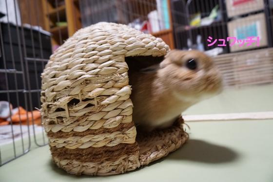 ぴょん子150318_01