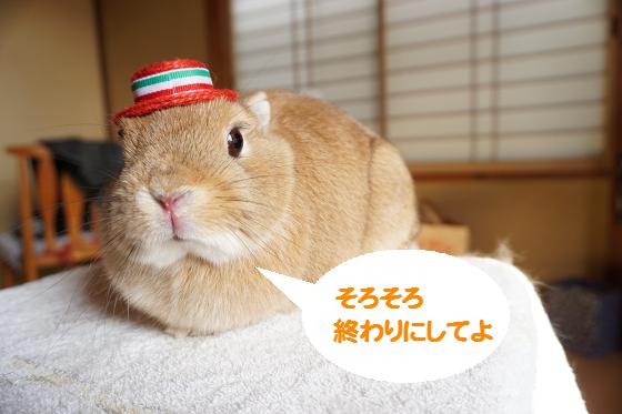 ぴょん子150323_06