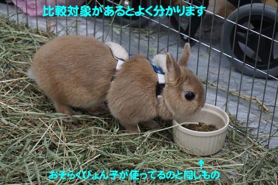 ぴょん子150118_05