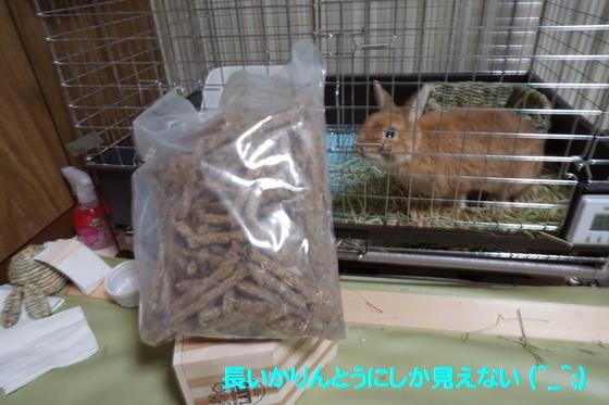 ぴょん子150118_12