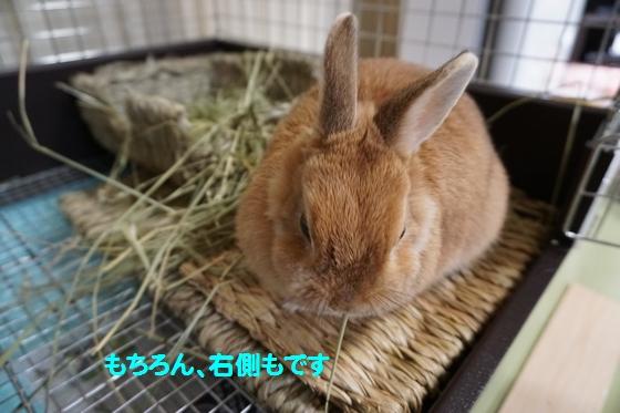 ぴょん子150201_05