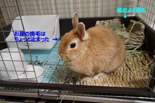 ぴょん子150209_01