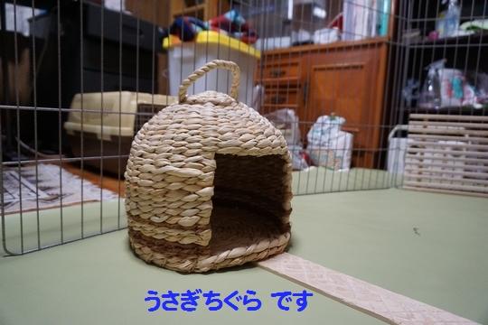 ぴょん子150212_01