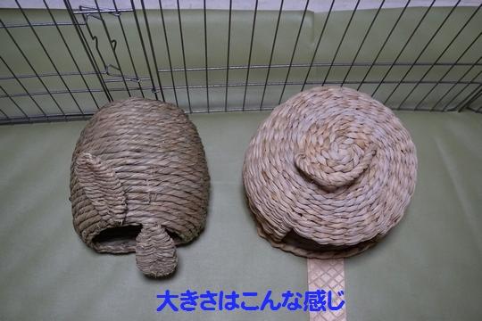 ぴょん子150212_02
