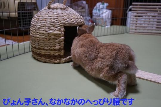 ぴょん子150212_03
