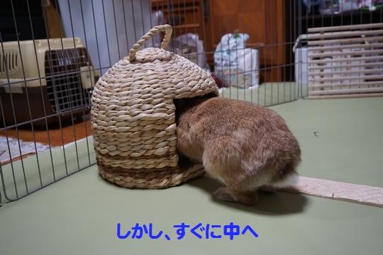 ぴょん子150212_04