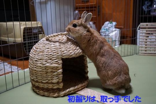 ぴょん子150212_05