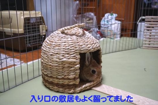 ぴょん子150212_06