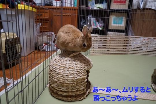 ぴょん子150212_08