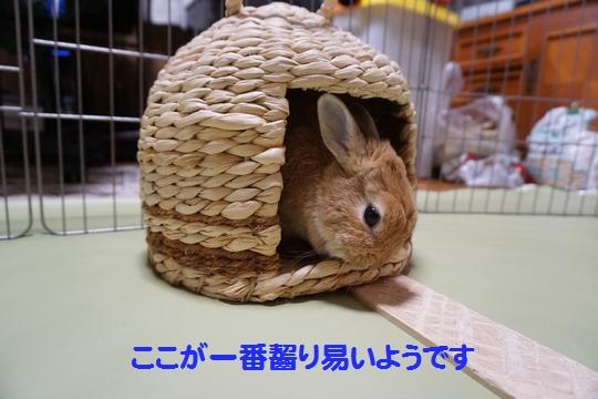 ぴょん子150212_0
