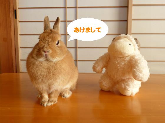 ぴょん子150101_03