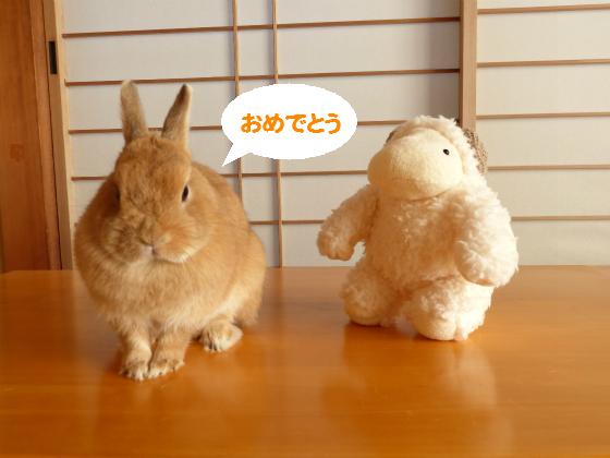 ぴょん子150101_04