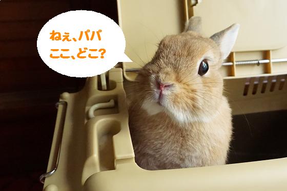 ぴょん子150528_04
