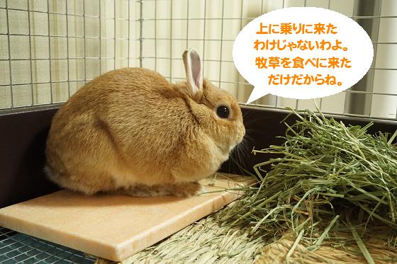 ぴょん子150530_02