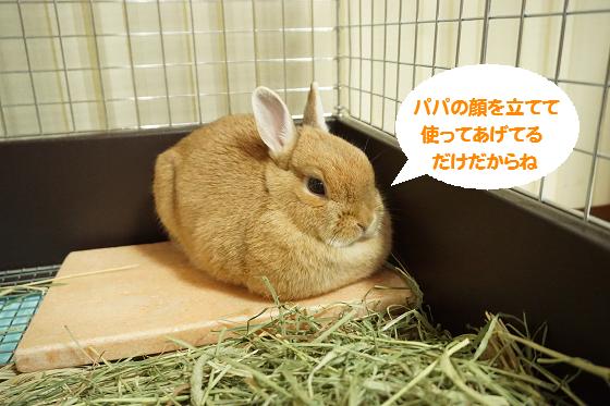 ぴょん子150530_07
