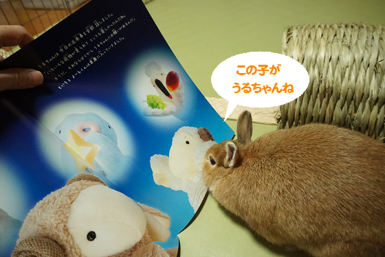 ぴょん子150604_08