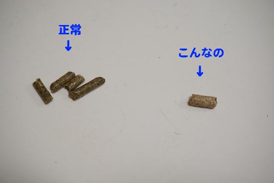 ぴょん子150614_01