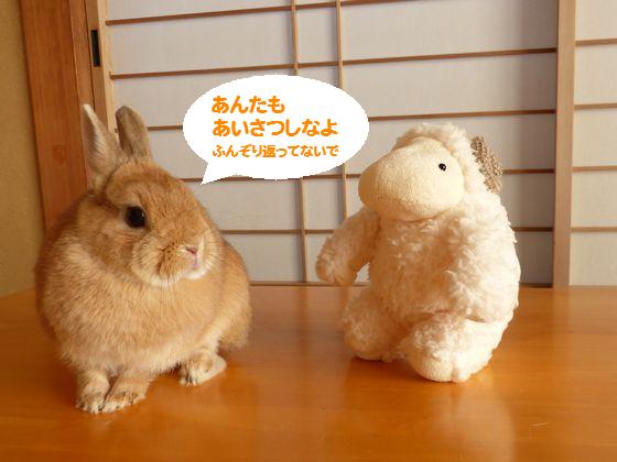 ぴょん子150101_01