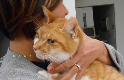 保護猫06