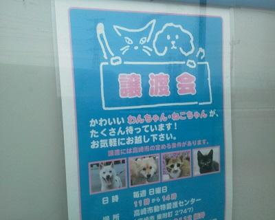 動物愛護センター03