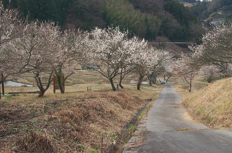 棚田に訪れる春 2