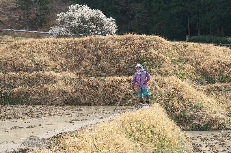 棚田に訪れる春 4