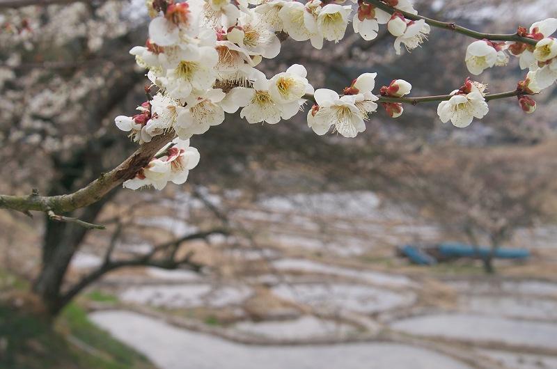 棚田で見つけた小さな春