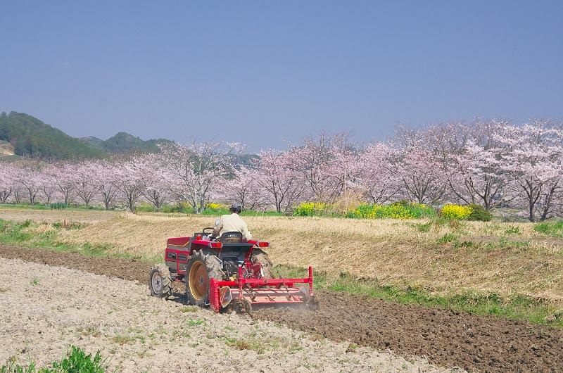 さくら咲く春