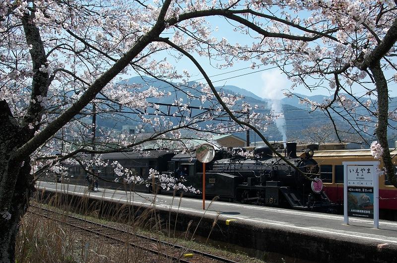 大井川鐵道に桜咲く頃 2