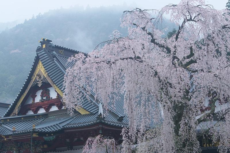 身延山久遠寺の春 壱
