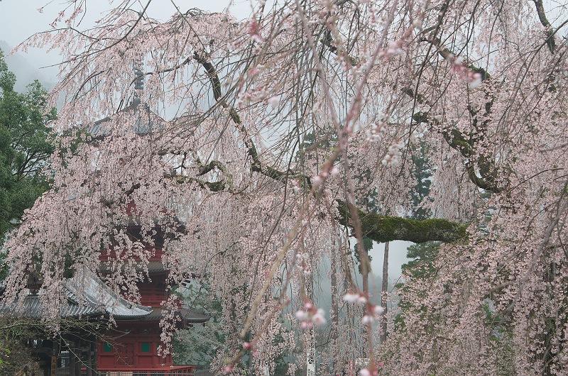 身延山久遠寺の春 弐