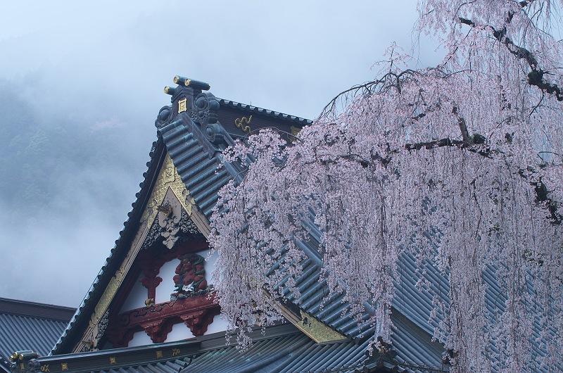 身延山久遠寺の春 参