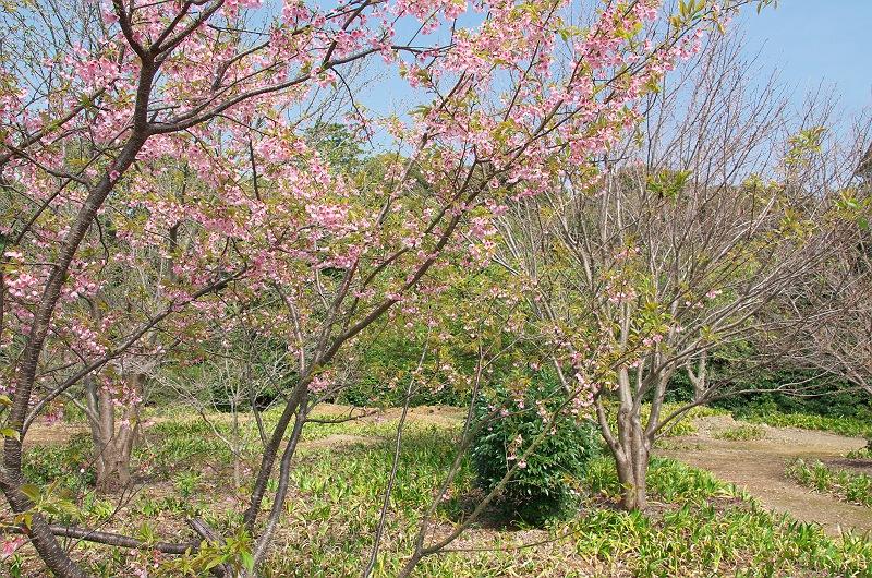 春の医王寺